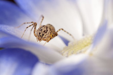 Close Up Of Spider On Flower