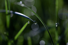 Close-up Of Water Drops On Gra...