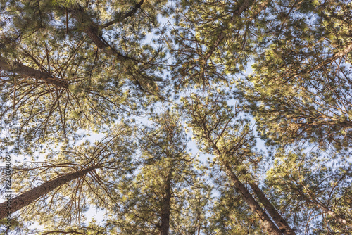 Low angle view of trees growing against sky in forest