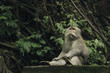 Monkey sitting in forest