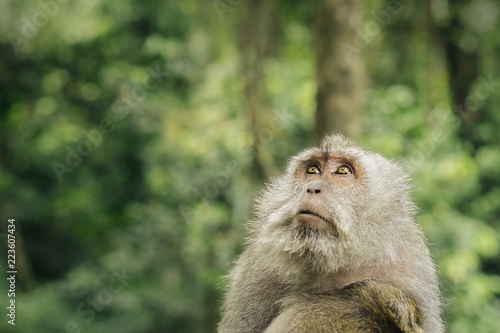 Close-up of monkey looking up in forest