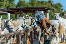 Cowboy In Der Camargue