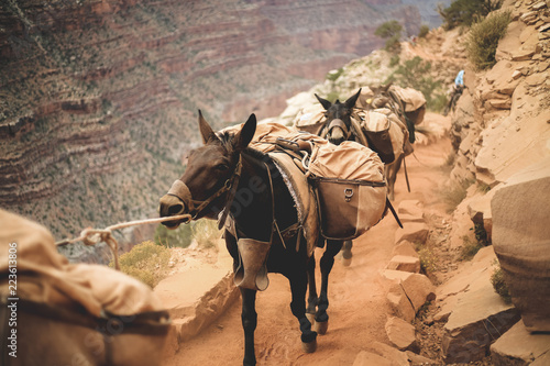 Donkeys carrying heavy loads while walking in row at Grand Canyon National Park