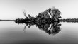 Leinwandbild Motiv Small island with trees reflected in calm water of Nove Mlyny Dam, Moravia, Czech Republic. Black and white image.