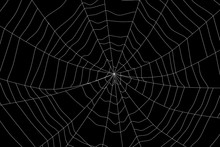 Large White Spider Web On Blac...