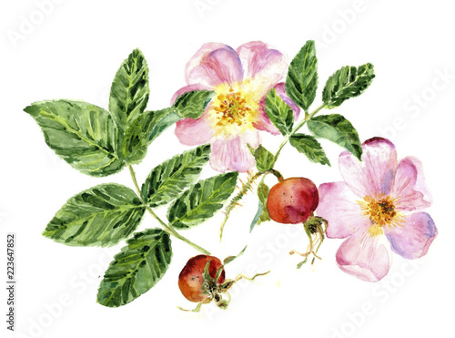 Fotografía watercolor illustration of beautiful green leaves,  flowers and fruits