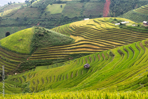 Fotobehang Rijstvelden landscape rice fields on terraced of Mu Cang Chai, YenBai, Vietnam