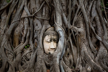 Buddha Head In The Roots Of The Banyan Tree, Thailand.