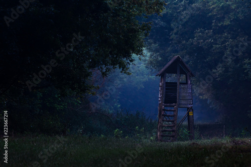 Hunting pulpit in forest at dusk