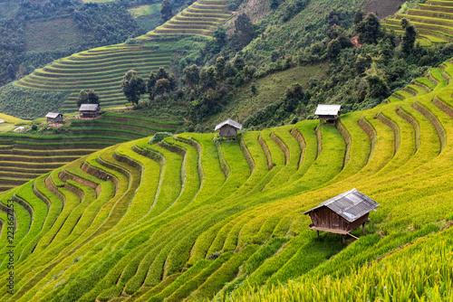 Poster Rijstvelden landscape rice fields on terraced of Mu Cang Chai, YenBai, Vietnam