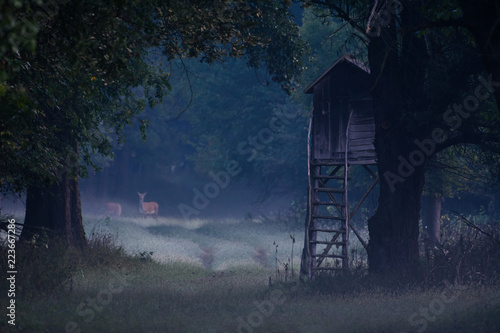 Hunting tower on a field in morning scenery