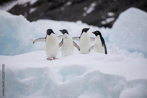 Tuinposter Pinguin penguin in the arctic