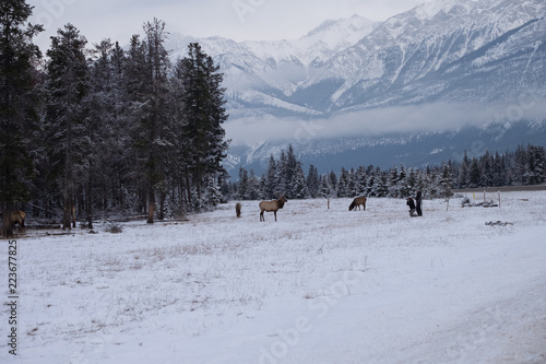 Fotobehang Elk in the Mountains