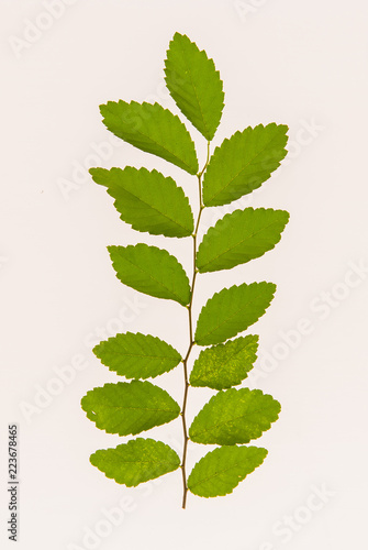 leaves, plants, and grasses on the white background