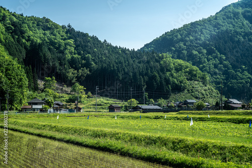 Poster Rijstvelden 京都の田園風景