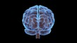 Brain 01 - HD wMatte