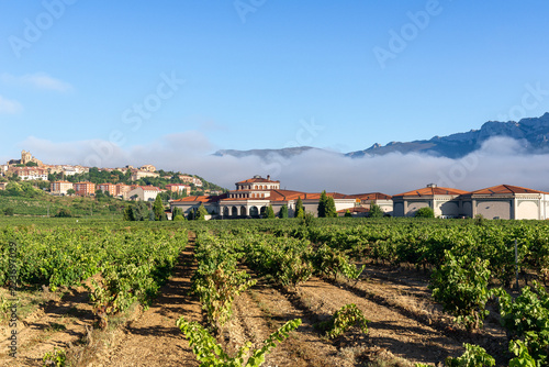Vineyard with Laguardia town as background, Rioja Alavesa, Spain