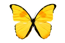 Yellow Butterfly Isolated On W...