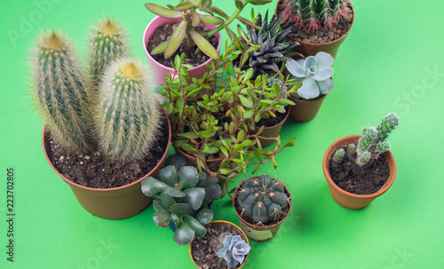 Papiers peints Cactus Pot with cactus on a green background
