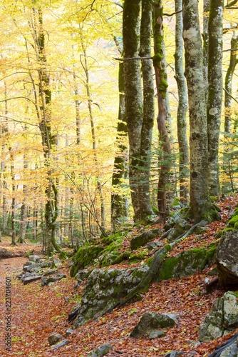 Tuinposter Zwavel geel Ordesa National Park