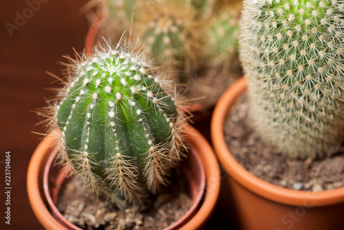 Tuinposter Cactus Cactus close up