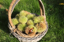 A Basket In The Green Grass Fu...