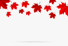 Autumn Red Maple Leaf Fall Iso...
