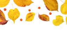 Pattern Made Of Autumn Red Berries And Yellow Leaves On White Isolated Background. Flat Lay, Top View, Minimal Style