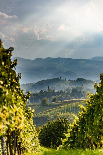 Foto  Austria Vineyards Sulztal an der Weinstrasse south Styria , wine country tourist spot