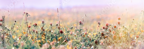 Beautiful meadow, flowering meadow flowers, flowering red clover - 223730662