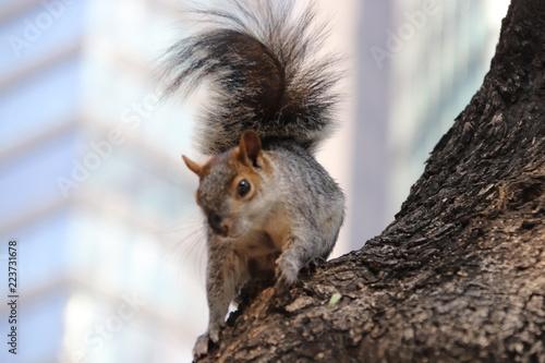 Foto op Canvas Eekhoorn Ardilla en árbol