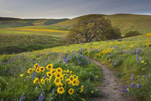 Path Lined With Wildflowers In The Hills Of Washington State