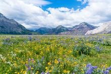 Wildflower Meadow In Waterton ...