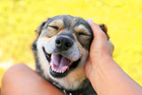 Fototapeta Dogs - ccute dog held out his face to the man for affection funny mouth opening