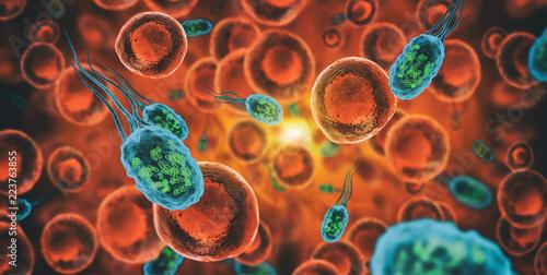 Photo Bacteria - Bacterium Helicobacter pylori