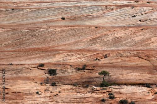 Fotografía  Navajo sandstone layers and cross beds, Zion National Park, Utah