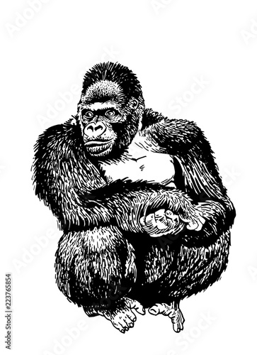 3402d411f Graphical vector gorilla isolated on white background, neanderthal man  sketch