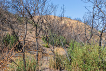 Hillsides Burned By Forest Fires In Southern California Mountains