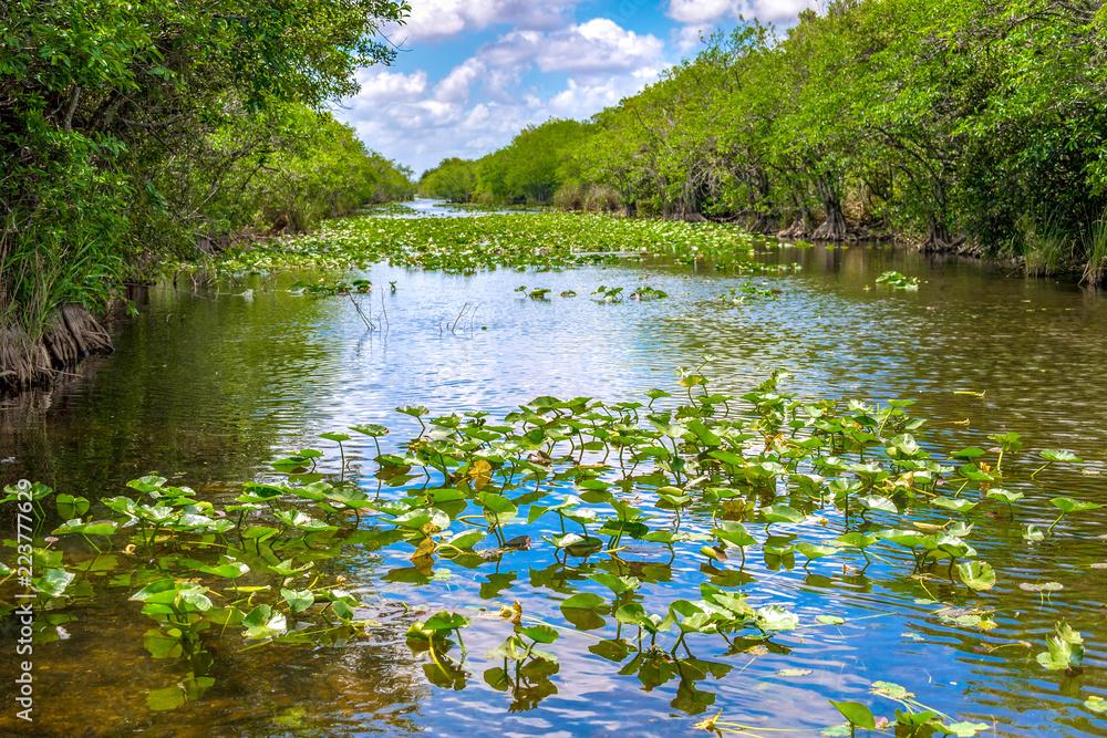 Fotografija  Everglades Channels with Mangrove Plants, Miami, USA