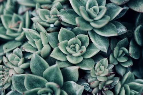Fotomural mexican typical plant summer pattern, green cactus, aloe, succulent