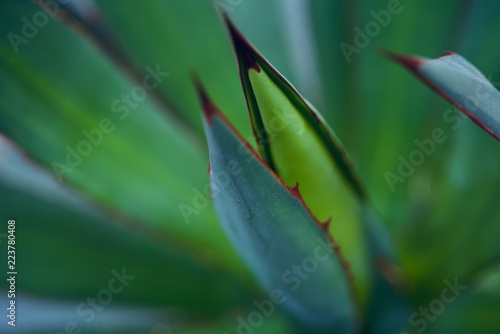 Foto mexican typical plant summer pattern, green cactus, aloe, succulent