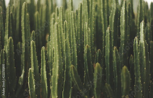 Foto green cactus background mexican plant fashion