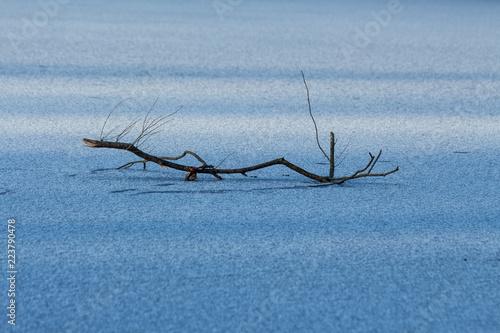 Fotografia  Ast im Eis