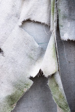 Dirty White Gray Torn Grunge Vintage Fabric Canvas Background Texture, With Green Moss Alge Growing On It