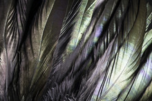Colorful And Iridescent Black ...