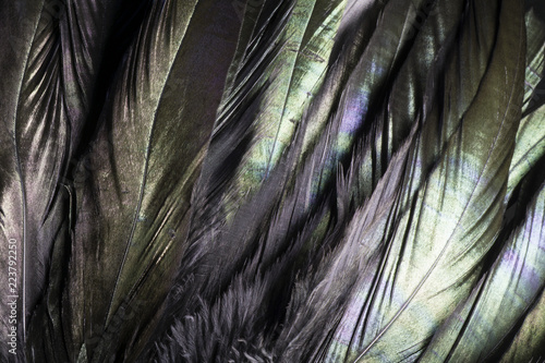 Colorful and iridescent black bird feathers.  I used special lighting to bring out the silky feather textures and pearl like green and purple colors.