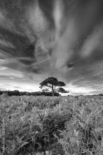 oszalamiajaco-lato-zmierzchu-krajobrazu-wizerunek-bratley-widok-w-nowego-lasow