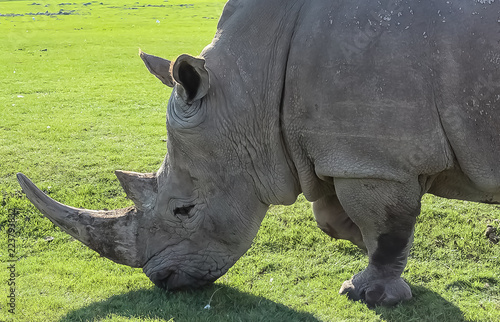 Tuinposter Neushoorn Tight shot of a Rhino face