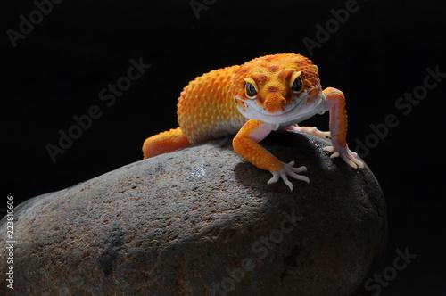 Fotografía leopard lizard gecko