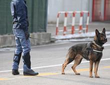 Police Dog With Policeman Duri...